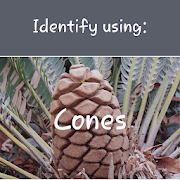Indigenous Cycads 1.1