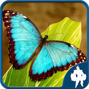 Butterfly Jigsaw Puzzles 1.9.17