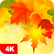 Autumn Wallpapers 4K 5.2.4